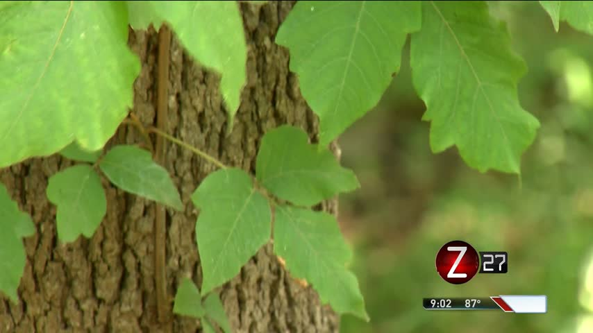 How to Identify and Avoid Poisonous Plants_29466055