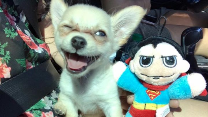 chewy puppy_1499376450994.jpg