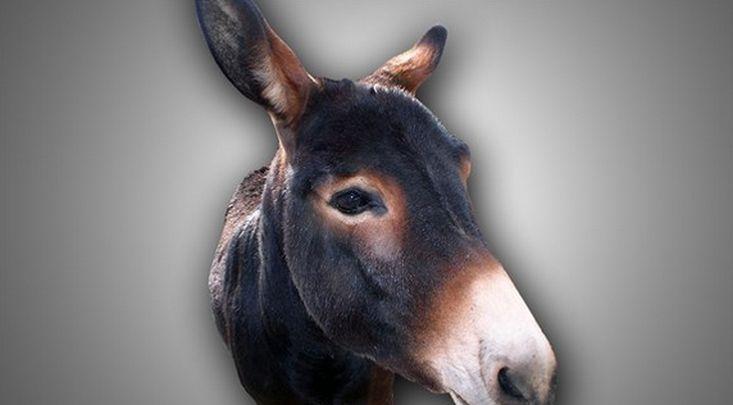 donkey_1501628016922.jpg