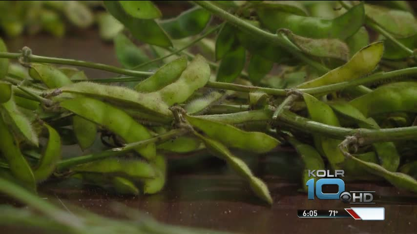 New Herbicide Sparks Controversy_43383522