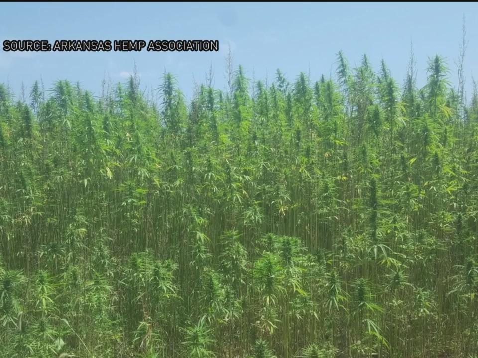 Legalizing_Industrial_Hemp_in_Arkansas_O_0_20171219003243