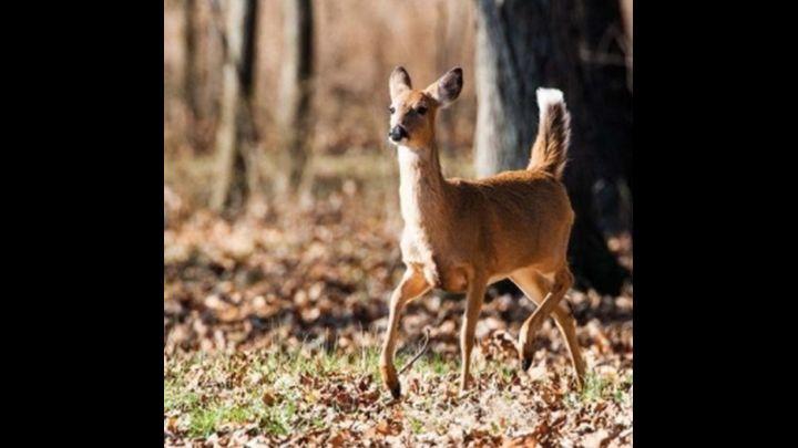 deer hunting season_1512699364977.jpg