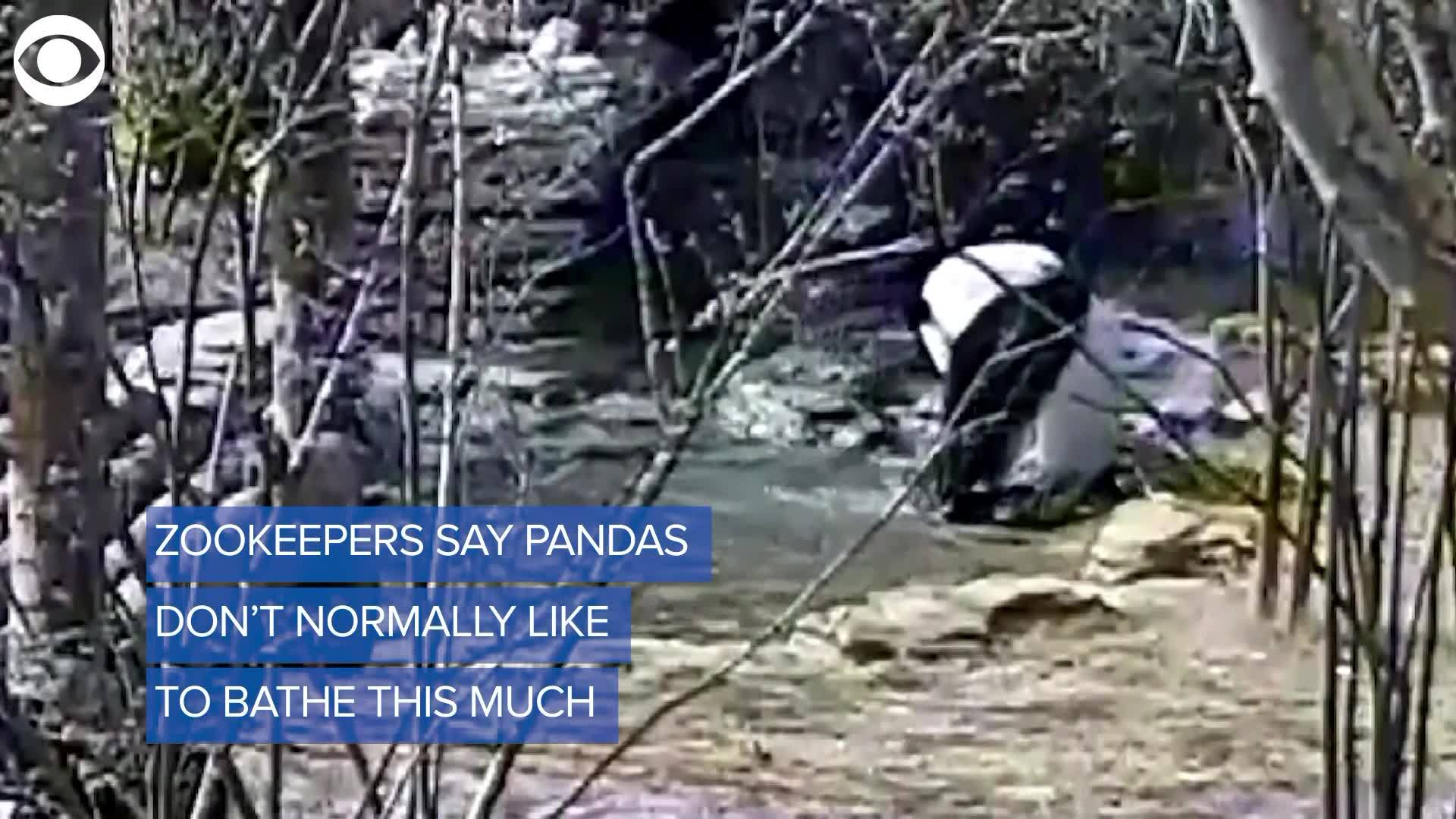 WEB_EXTRA__Panda_Loves_Bath_0_20180121005129