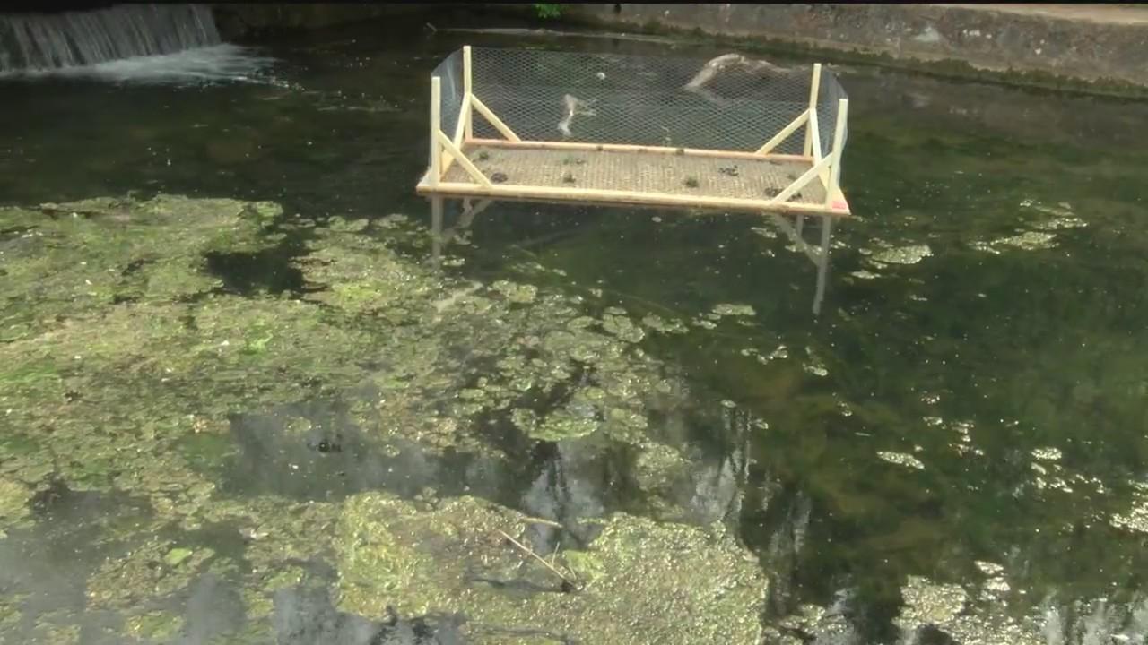 Floating_Wetlands_Help_Rid_Sequiota_Park_0_20180502231408