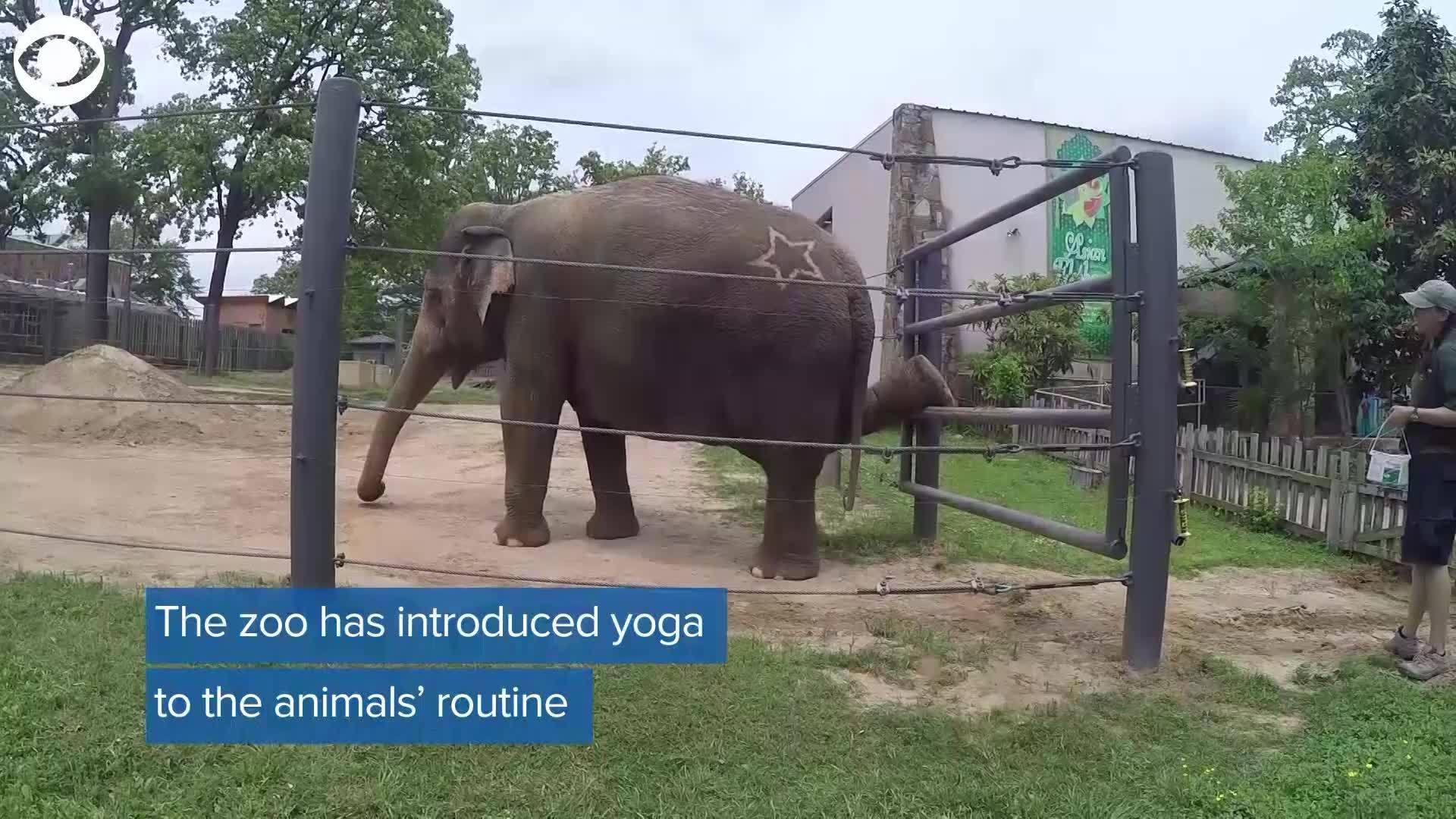 WEB_EXTRA__Elephant_Yoga_0_20180504203458
