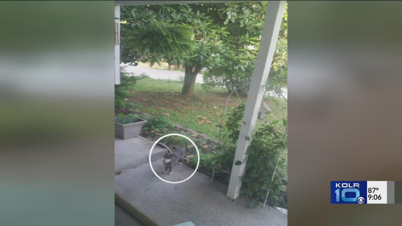 Feral_Cats_Haunt_Ozark_Neighborhood__Res_0_20180701030232