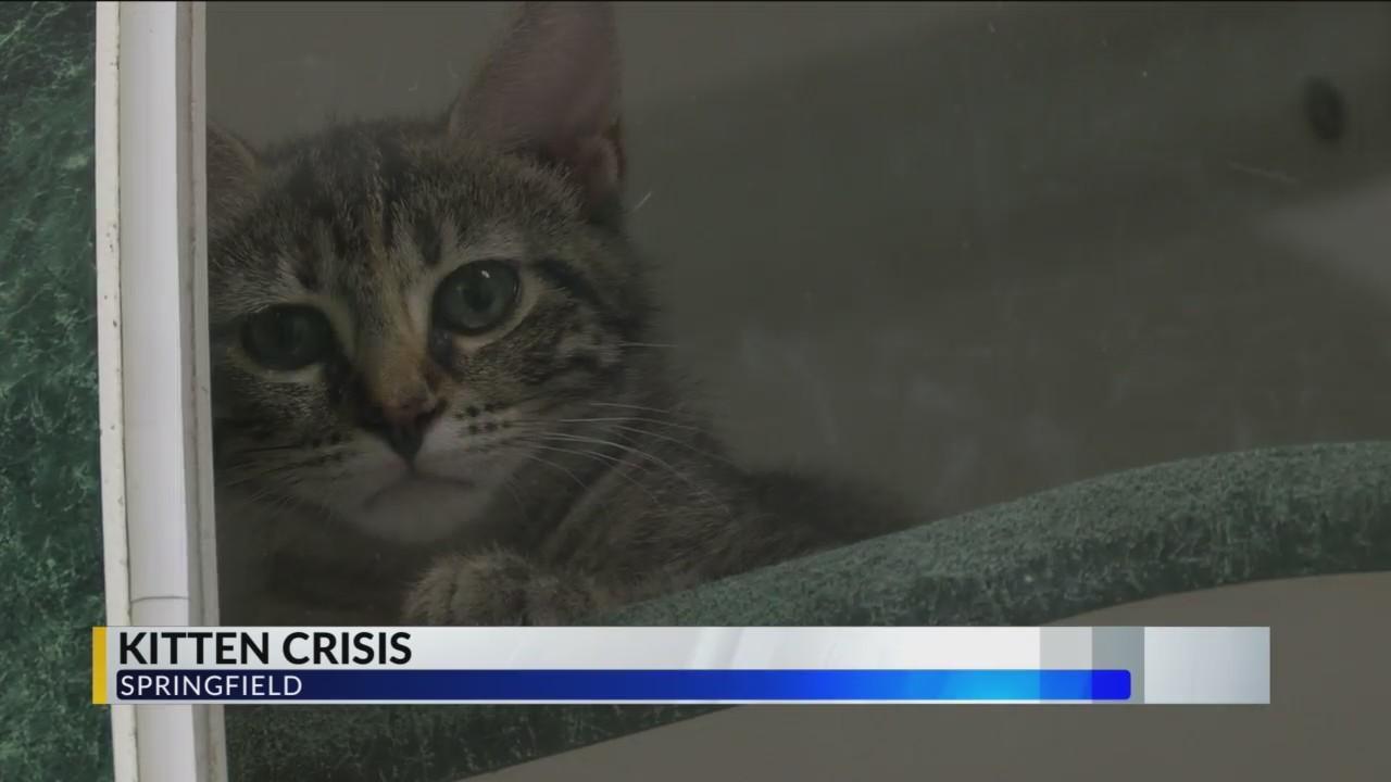 Humane_Society_Enters_Kitty_Crisis_Mode_0_20180706222748