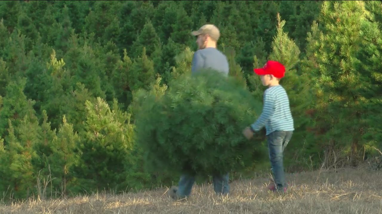 Tree_Farm_providing_Christmas_traditions_0_20181125031634