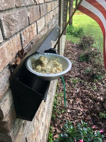 mashed potatoes found on someone's mailbox-842162548