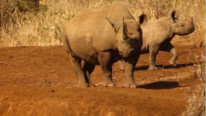 rhino poachers_1554639115361.jpg.jpg