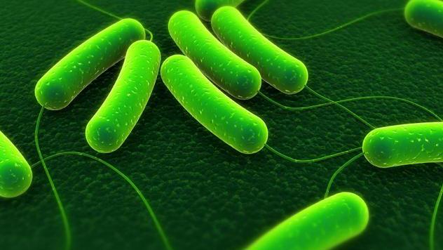 E coli bacteria_1464731560507-159532.jpg45942345