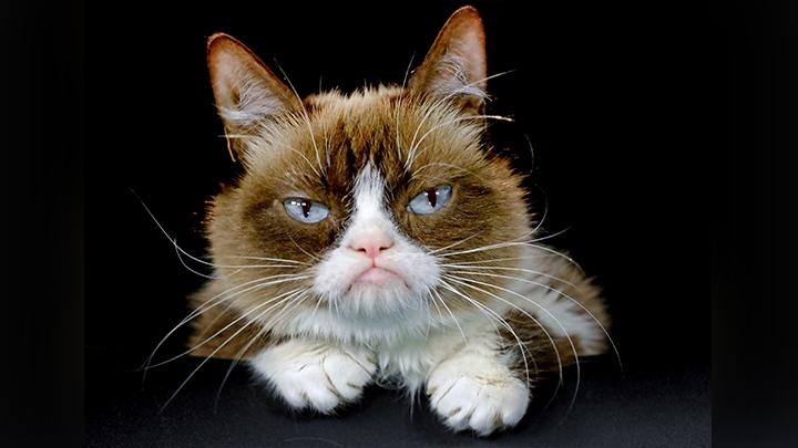 Grumpy Cat_1558092997835.jpg.jpg