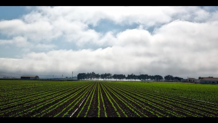 california farm pixabay_1560543236071.jpg.jpg