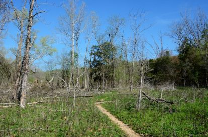 The low areas near Table Rock lake are quite open in places. The trail as you can see, is very clear