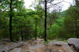 Piney Creek Wilderness - Descending the Tower Trail