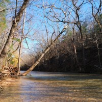 Photo gallery: Busiek State Forest and Wildlife Area