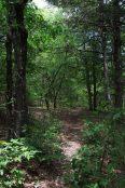 Off the regular trails at Busiek