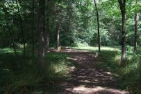 The approach to Campsite 8 - Busiek State Forest and Wildlife Area