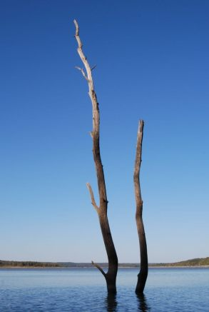 Dead trees in Harry S Truman Lake, Missouri