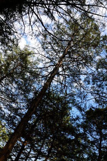Cedar trees provide the shade at Big Bay
