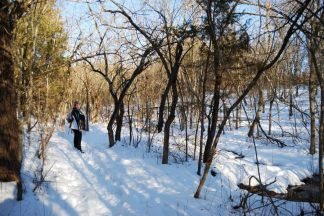 Ginger on a snowy Sac River Trail