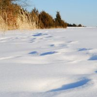 Visit a wildlife area and check out the animal tracks in the snow