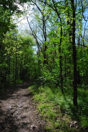 Spring on the White trail at Busiek State Park and Wildlife Area
