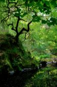 Dark pools and green light from the surrounding trees on the River Lednock, Comrie, Scotland