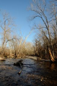 Woods Fork - Busiek State Forest and Wildlife Area