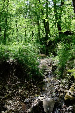 Intermittent spring - Busiek State Forest and Wildlife Area - White Trail
