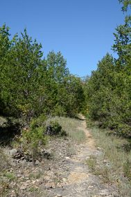 Pilot Knob Trail - Hercules Glades Wilderness