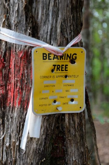Bearing tree (with bullet holes) - near Coy Bald Trailhead