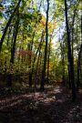 Hercules Glades Wilderness - Fall color on the Pees Hollow Trail
