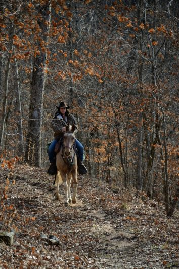 Horse and Rider on the Silver Trail - Busiek State Forest and Wildlife Area