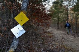 New Silver and Yellow Trail markers at Busiek State Forest and Wildlife Area