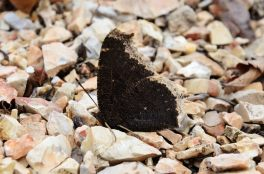 We were surprised to see a couple of butterflies out today - has no one told them it is still February?
