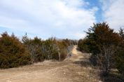 Trail conditions on the ridge of the yellow and silver trails Busiek State Forest and Wildlife Area