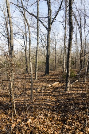 Spot the trail - Compton Hollow Conservation Area