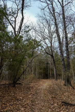 Hercules Glades, Tower Trail, heading west on the ridge near the trailhead. March 23, 2018 | www.ozarkswalkabout.com | Copyright © 2018 Gary Allman, all rights reserved
