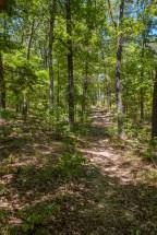 The last climb on the 'Farm Track Trail'