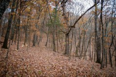 There are a lot of leaves on the trail. That final hill doesn\'t look anywhere near as daunting in this picture.