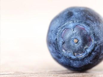 OZblu Bigger Bolder Blueberry