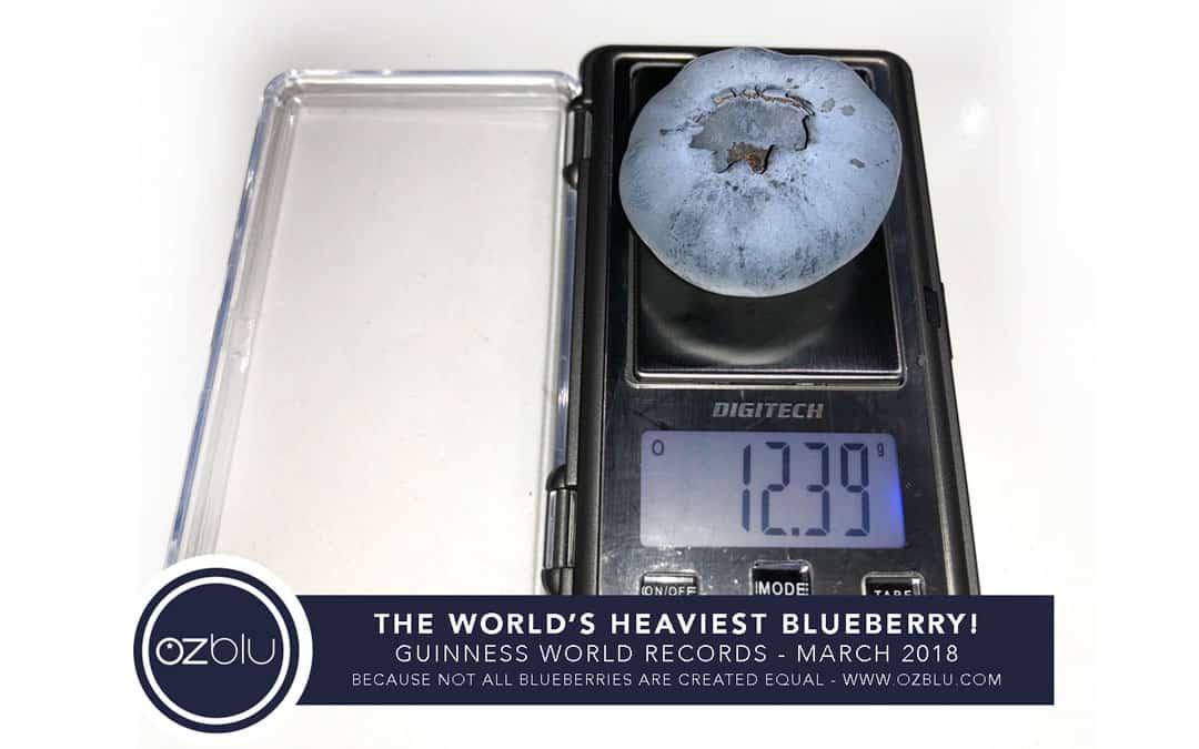 OZblu World's Heaviest Blueberry
