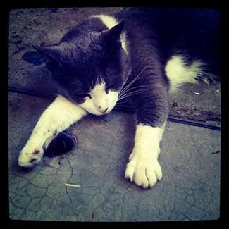 Un gato en la calle