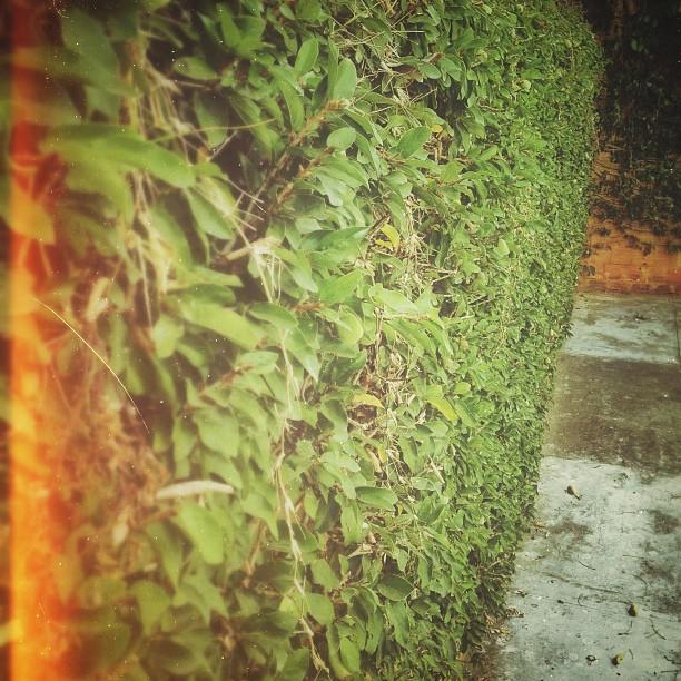 Jugando con #Snapseed