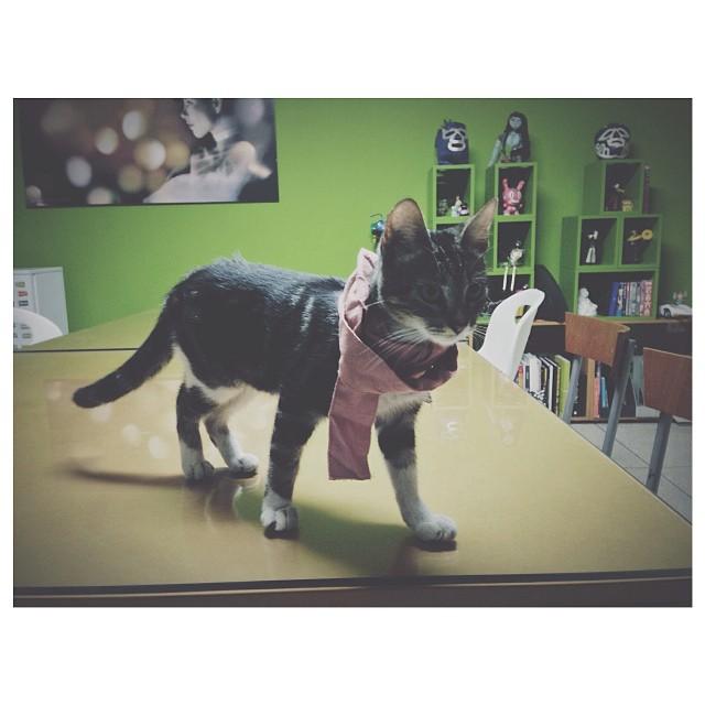 Llegué y tenemos mascota en la oficina.