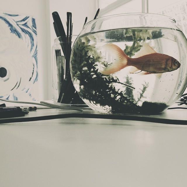 Este pez llevo a su compañero al suicidio