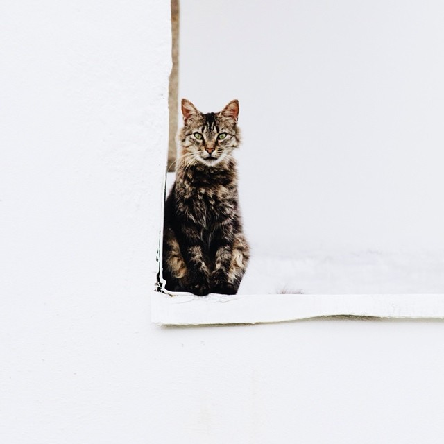 A cat in the celling