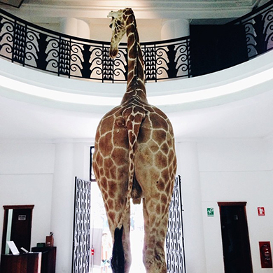 Sir, there's a giraffe in the room