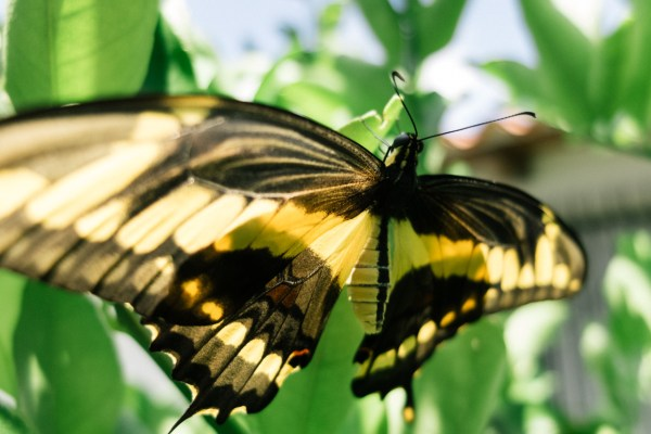 My Week in Pictures – Mariposa